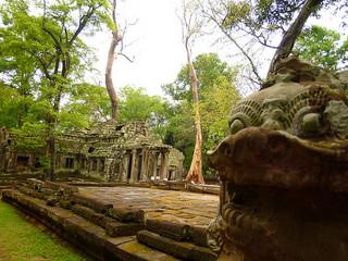 Đền Ta Prohm Siem Reap, Campuchia