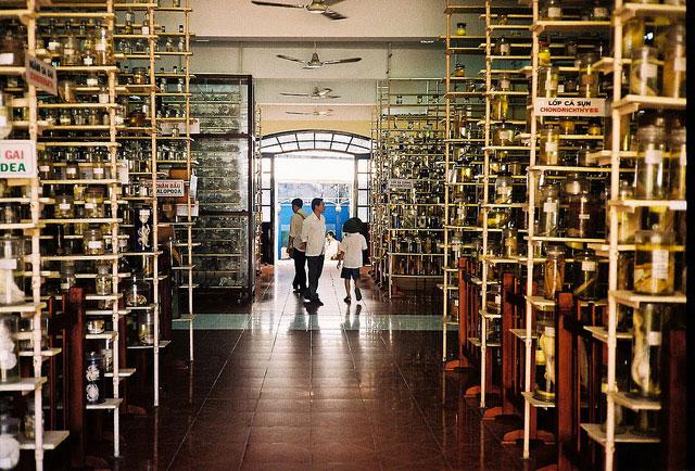 Du lịch Viện Hải Dương Học, Nha Trang
