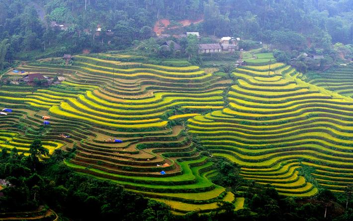 Ruong Bac Thang - Ha Giang